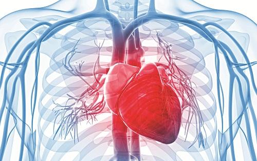"""Có thể bạn chưa biết: Hệ tim mạch cũng """"lão hóa"""" theo thời gian"""